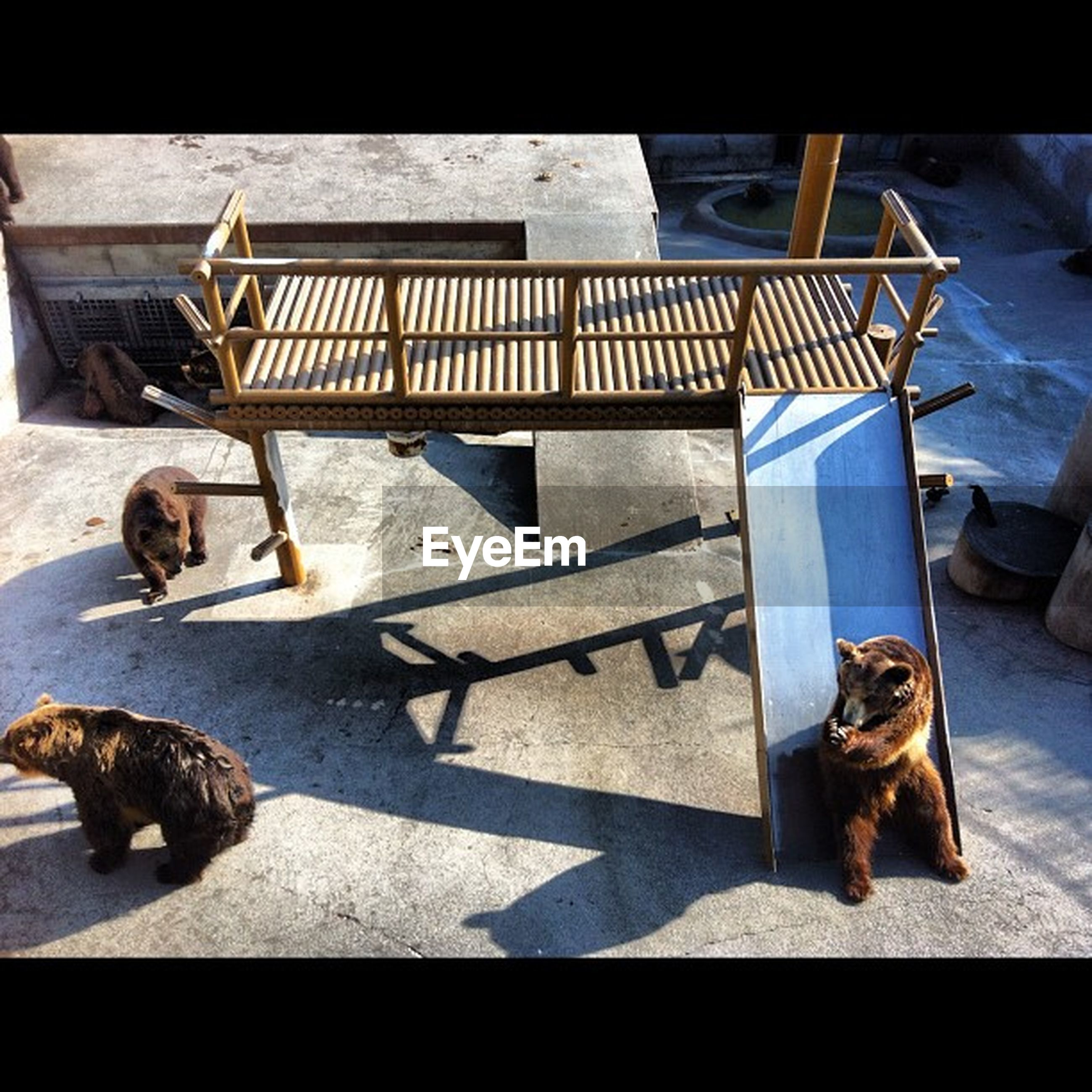animal themes, one animal, domestic animals, pets, sunlight, dog, high angle view, relaxation, shadow, mammal, sidewalk, bench, domestic cat, street, day, sleeping, lying down, sitting, chair, outdoors