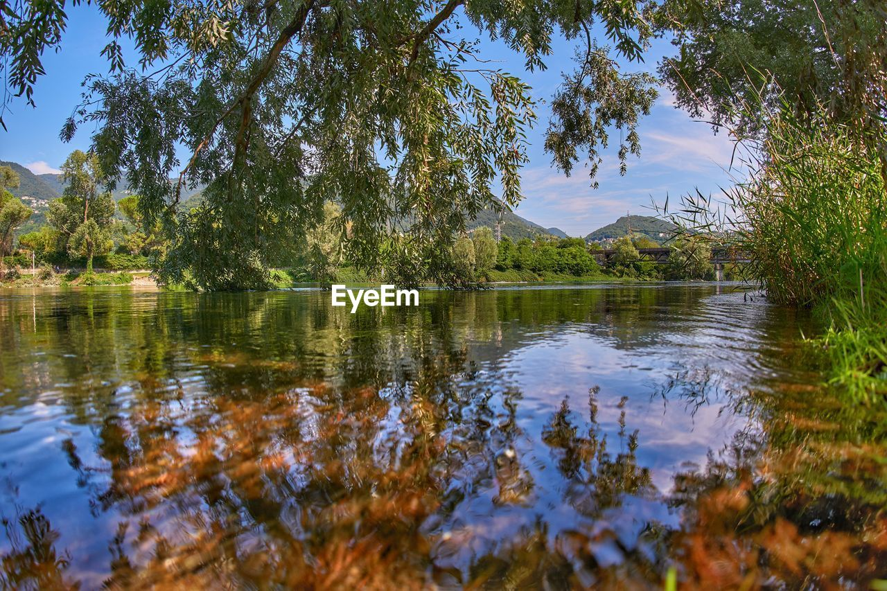 tree, water, reflection, lake, plant, tranquility, tranquil scene, scenics - nature, beauty in nature, sky, nature, growth, no people, day, non-urban scene, mountain, waterfront, green color, outdoors