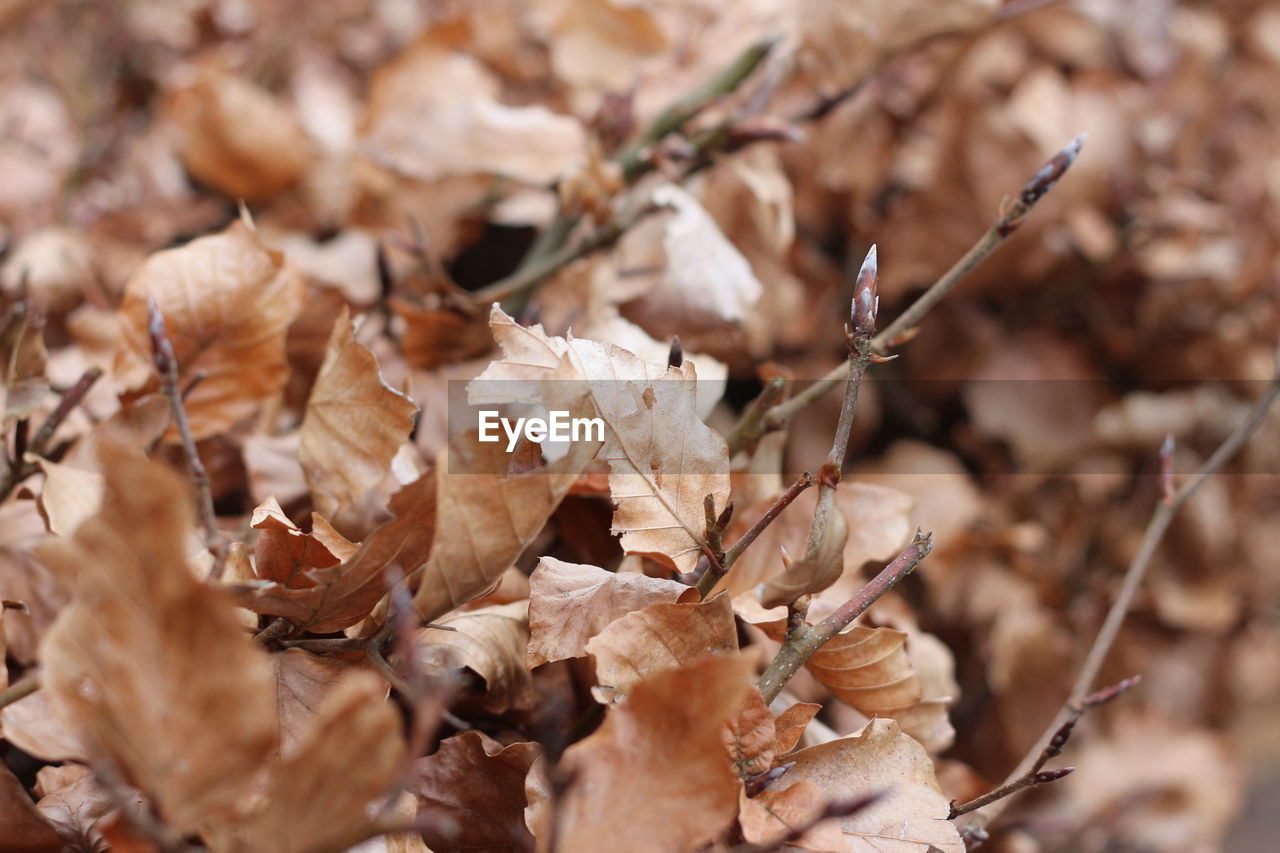 dry, nature, dried plant, autumn, day, fragility, leaf, outdoors, close-up, no people, beauty in nature