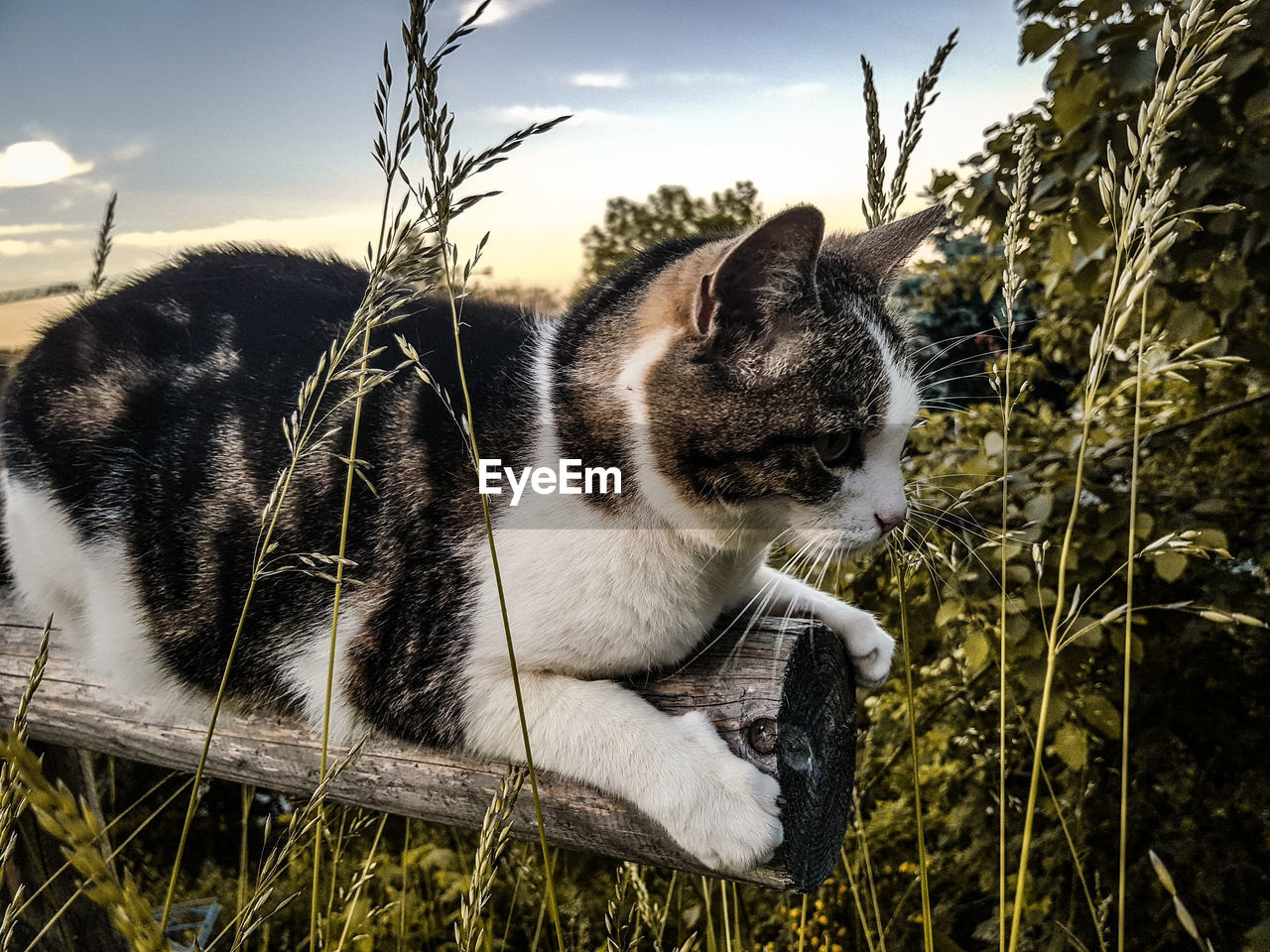 cat, domestic cat, mammal, animal, one animal, feline, domestic, pets, animal themes, domestic animals, vertebrate, plant, grass, relaxation, no people, nature, looking, whisker, close-up, looking away, profile view