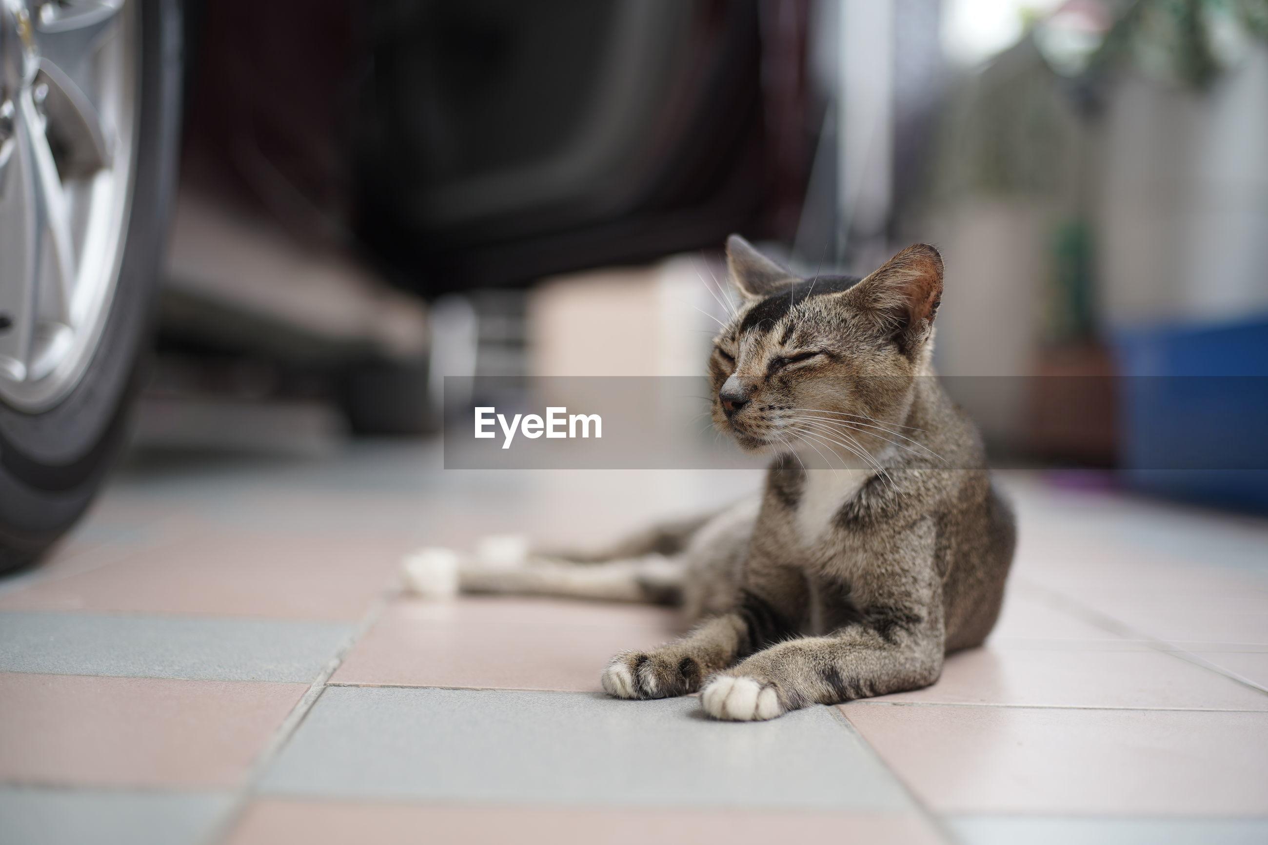 CAT SITTING ON FLOOR IN ROOM