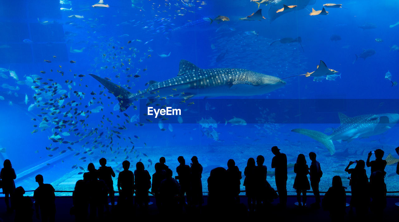 People at aquarium