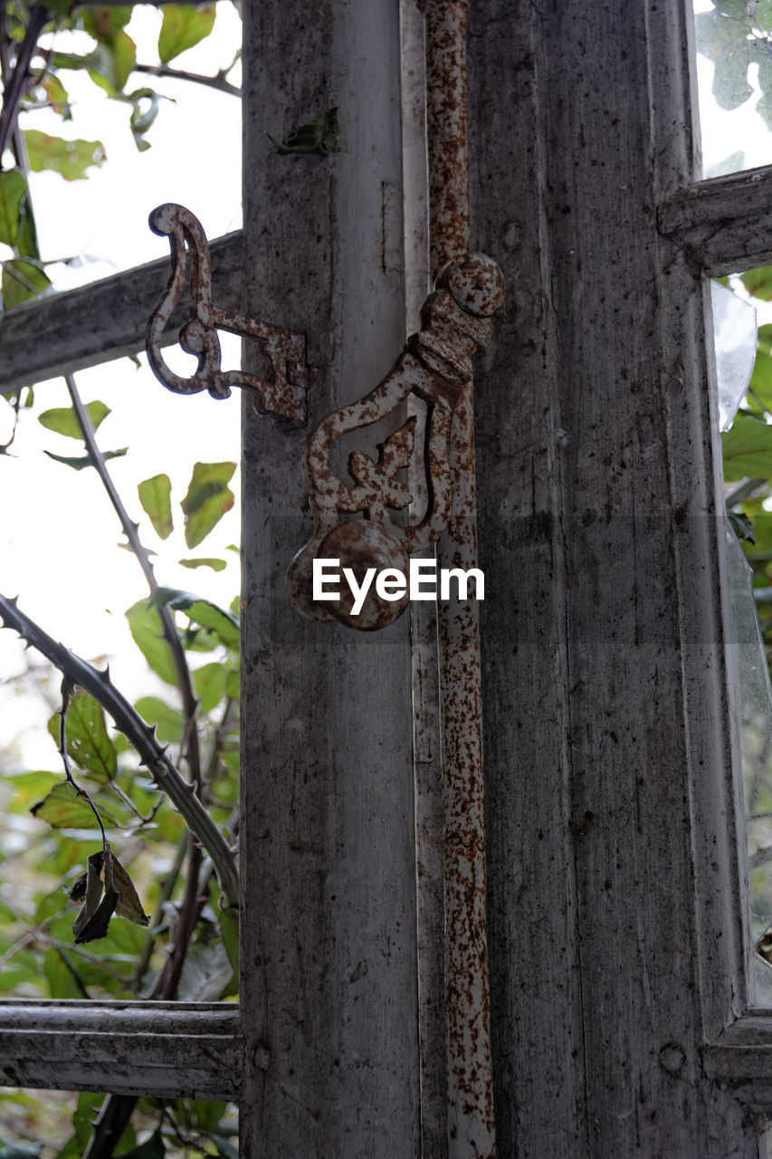 focus on foreground, no people, day, close-up, rusty, outdoors, tree, growth, nature, animal themes