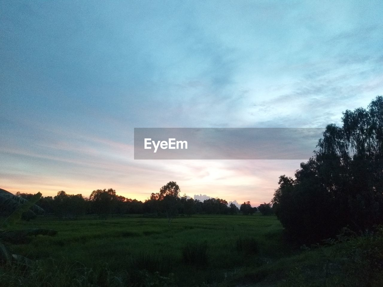 sky, tranquility, plant, scenics - nature, tranquil scene, tree, cloud - sky, beauty in nature, sunset, landscape, environment, field, nature, land, no people, non-urban scene, growth, rural scene, outdoors, idyllic