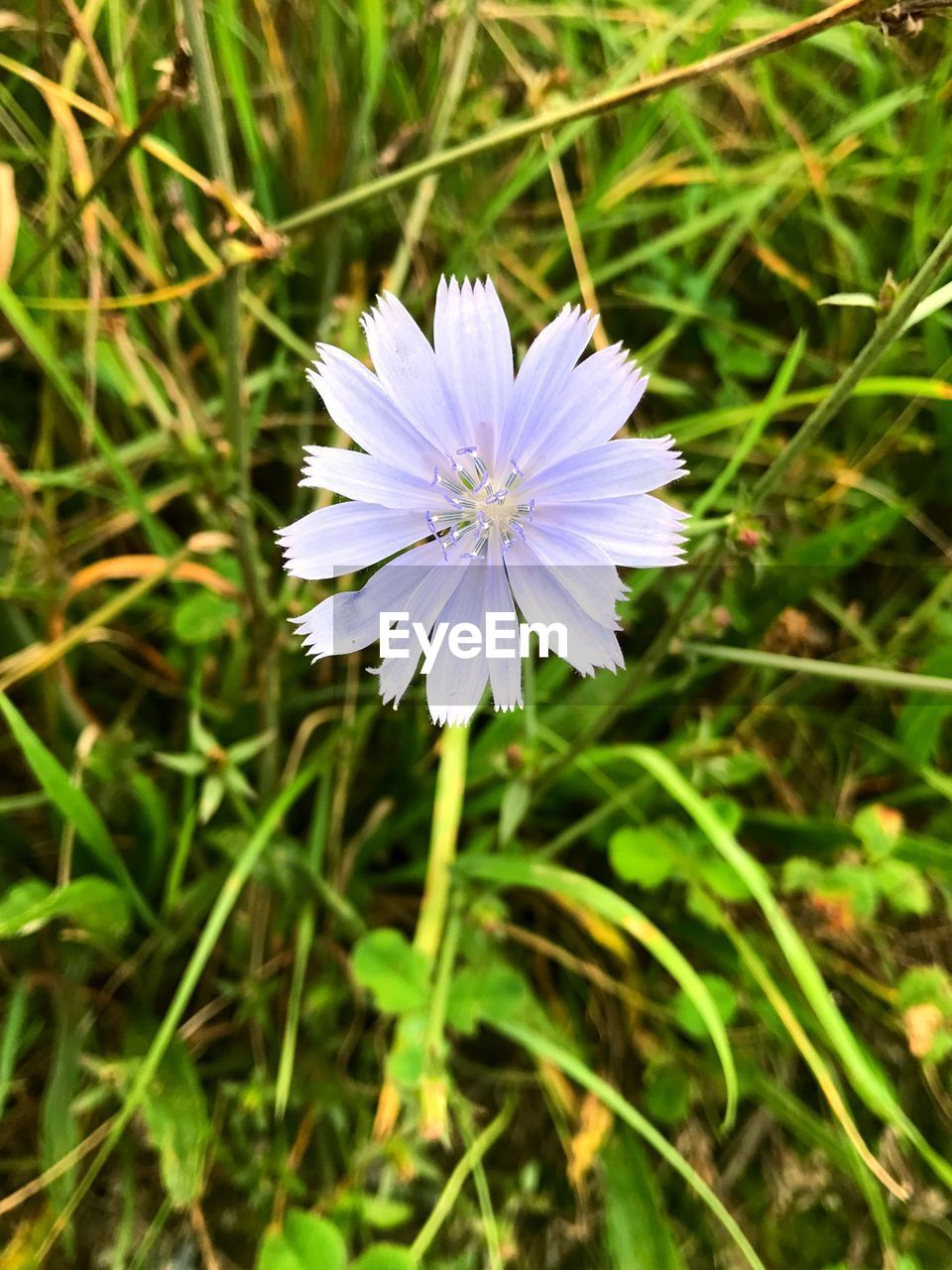 flower, nature, growth, fragility, beauty in nature, petal, flower head, plant, field, freshness, blooming, no people, grass, outdoors, day, close-up