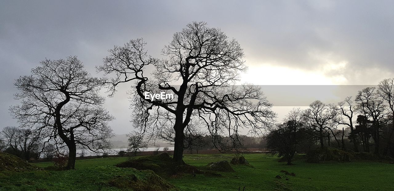 tree, plant, sky, beauty in nature, tranquility, tranquil scene, nature, landscape, land, scenics - nature, bare tree, field, cloud - sky, environment, non-urban scene, grass, no people, branch, day, growth, outdoors
