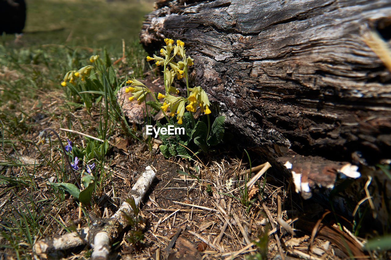 plant, growth, land, flower, field, nature, flowering plant, day, beauty in nature, no people, selective focus, close-up, fragility, vulnerability, freshness, tree, fungus, high angle view, falling, outdoors, bark, toadstool