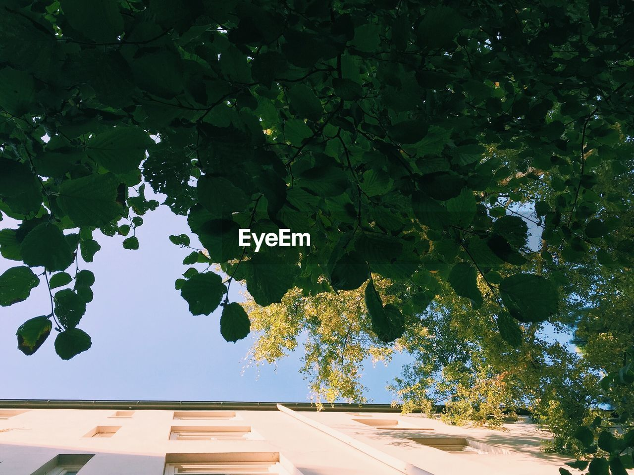 Directly Below Shot of Trees And Building Against Sky