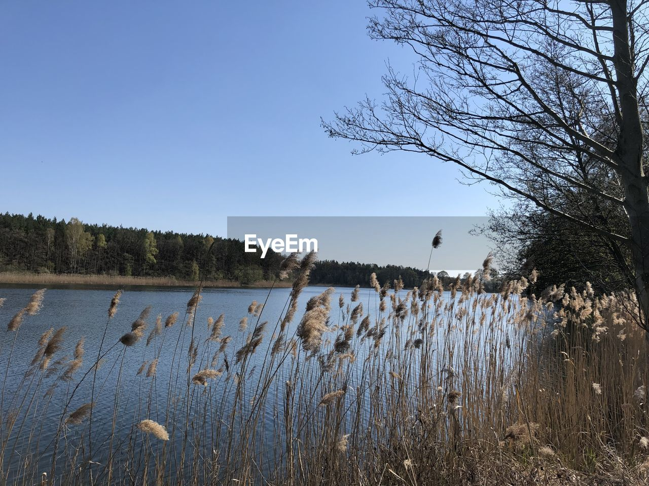 water, plant, sky, tree, tranquility, scenics - nature, tranquil scene, lake, growth, beauty in nature, nature, no people, day, non-urban scene, land, clear sky, landscape, grass, outdoors