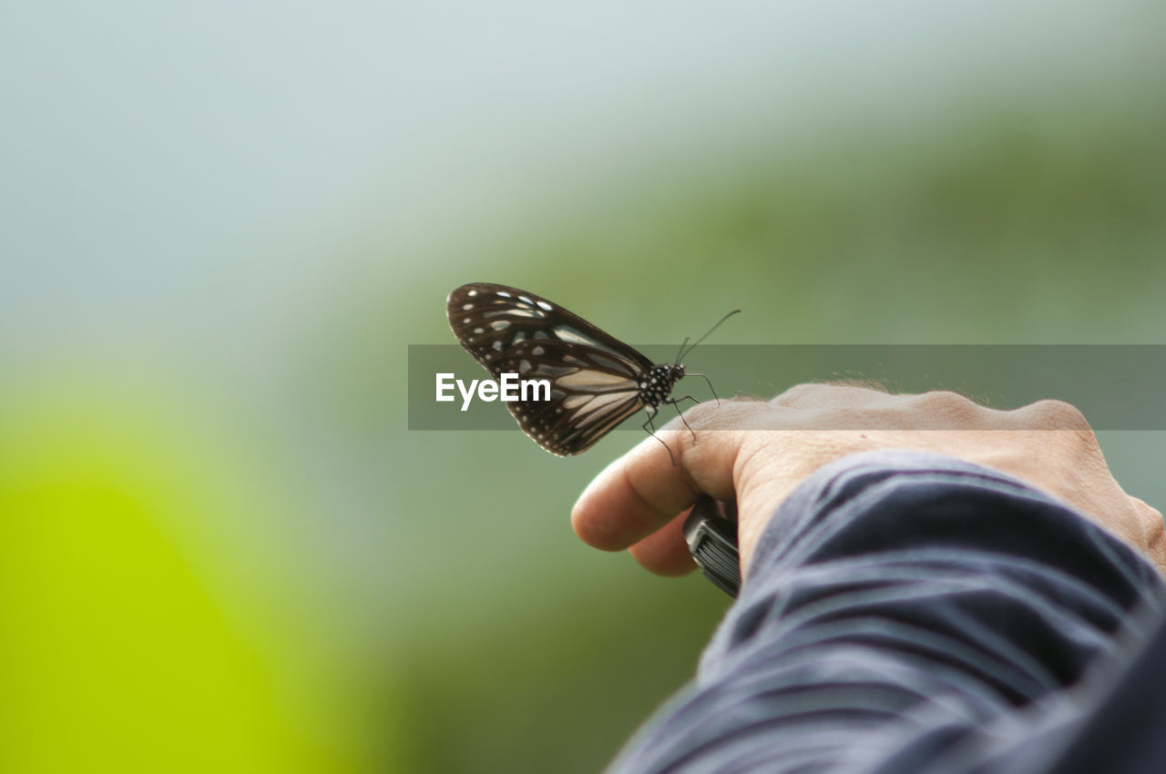 one person, human hand, insect, hand, invertebrate, human body part, real people, animal wing, animal wildlife, animals in the wild, one animal, butterfly - insect, day, focus on foreground, holding, personal perspective, body part, outdoors, finger, butterfly