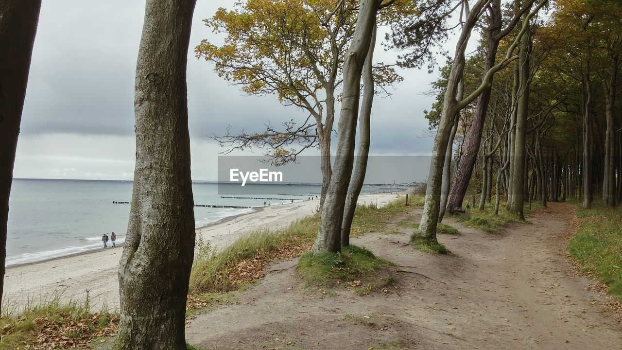 sea, tree, water, scenics, nature, horizon over water, tranquil scene, beauty in nature, tranquility, tree trunk, day, no people, beach, sky, growth, outdoors, grass