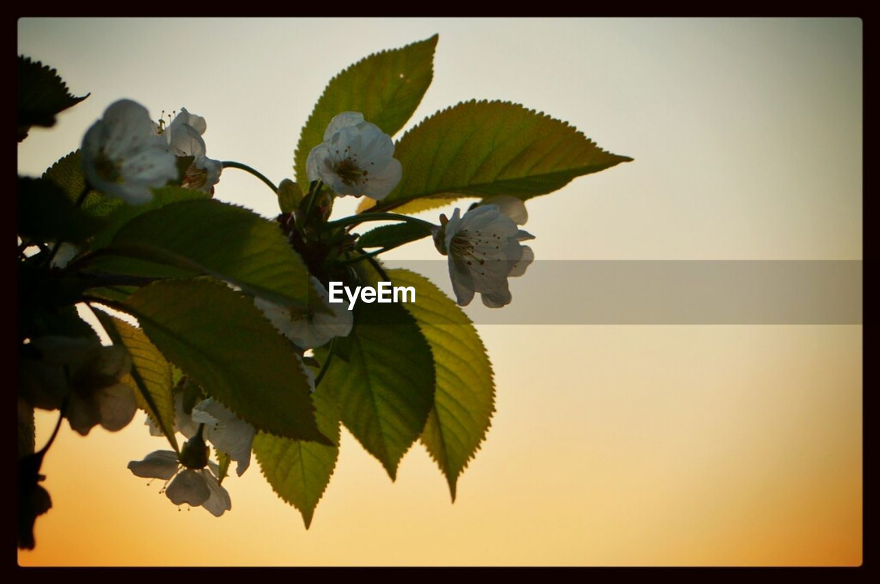 leaf, nature, growth, beauty in nature, plant, flower, no people, freshness, clear sky, outdoors, close-up, fragility, branch, day, tree, sky
