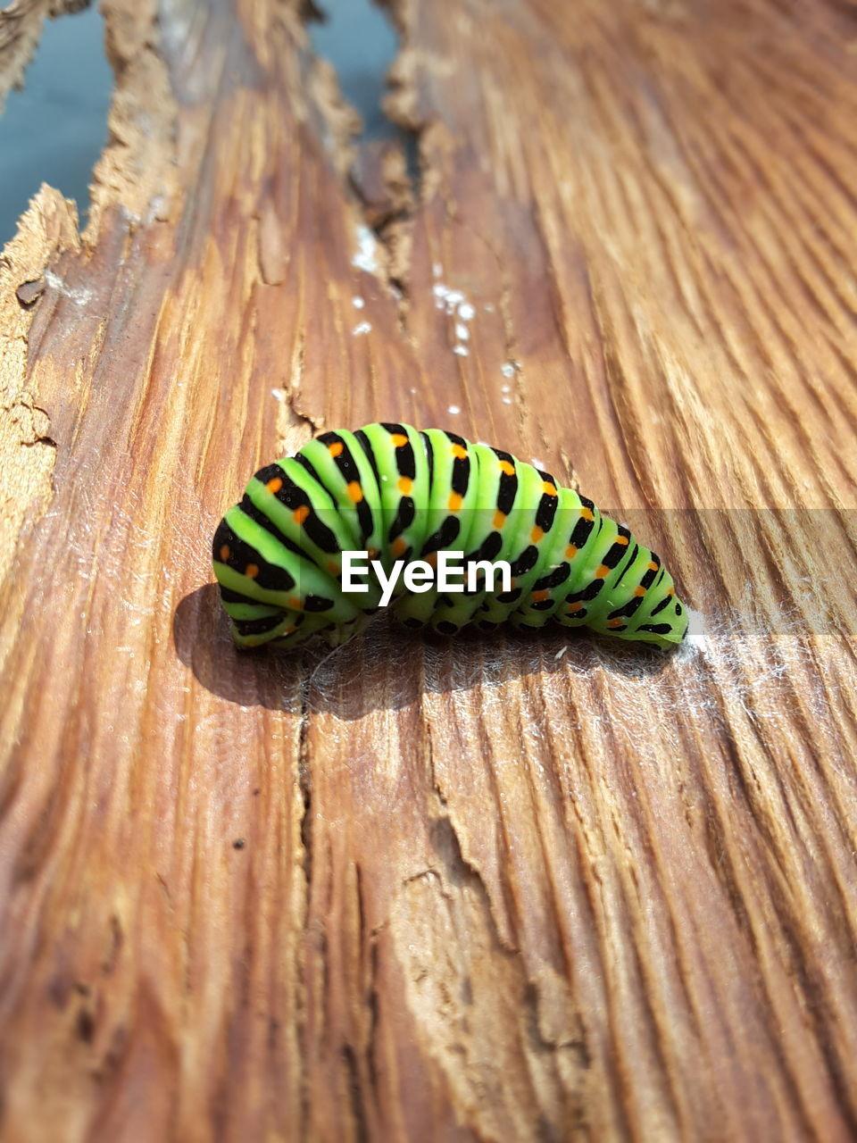 Close-up of caterpillar on wood