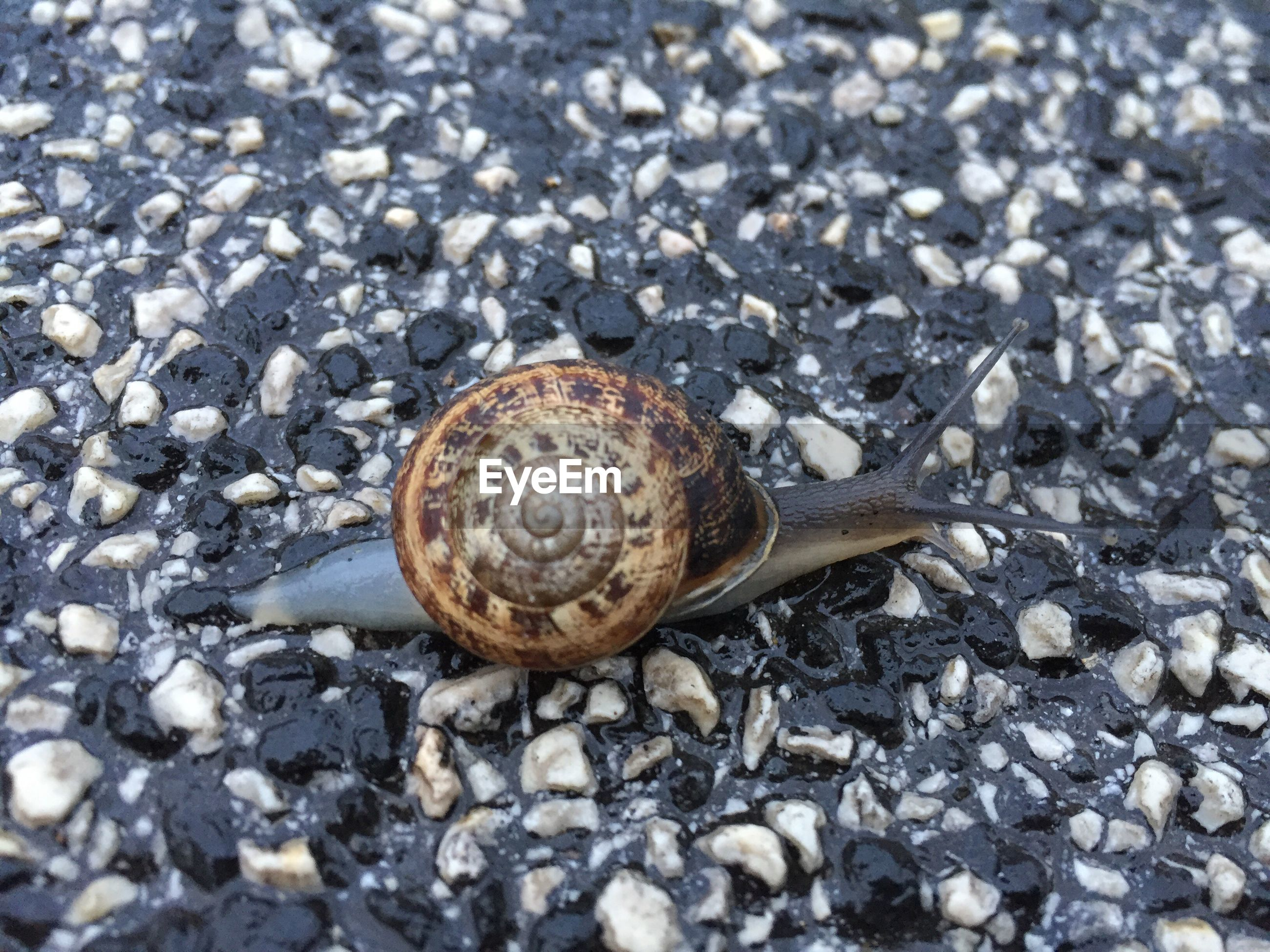 Close-up of snail on wet footpath