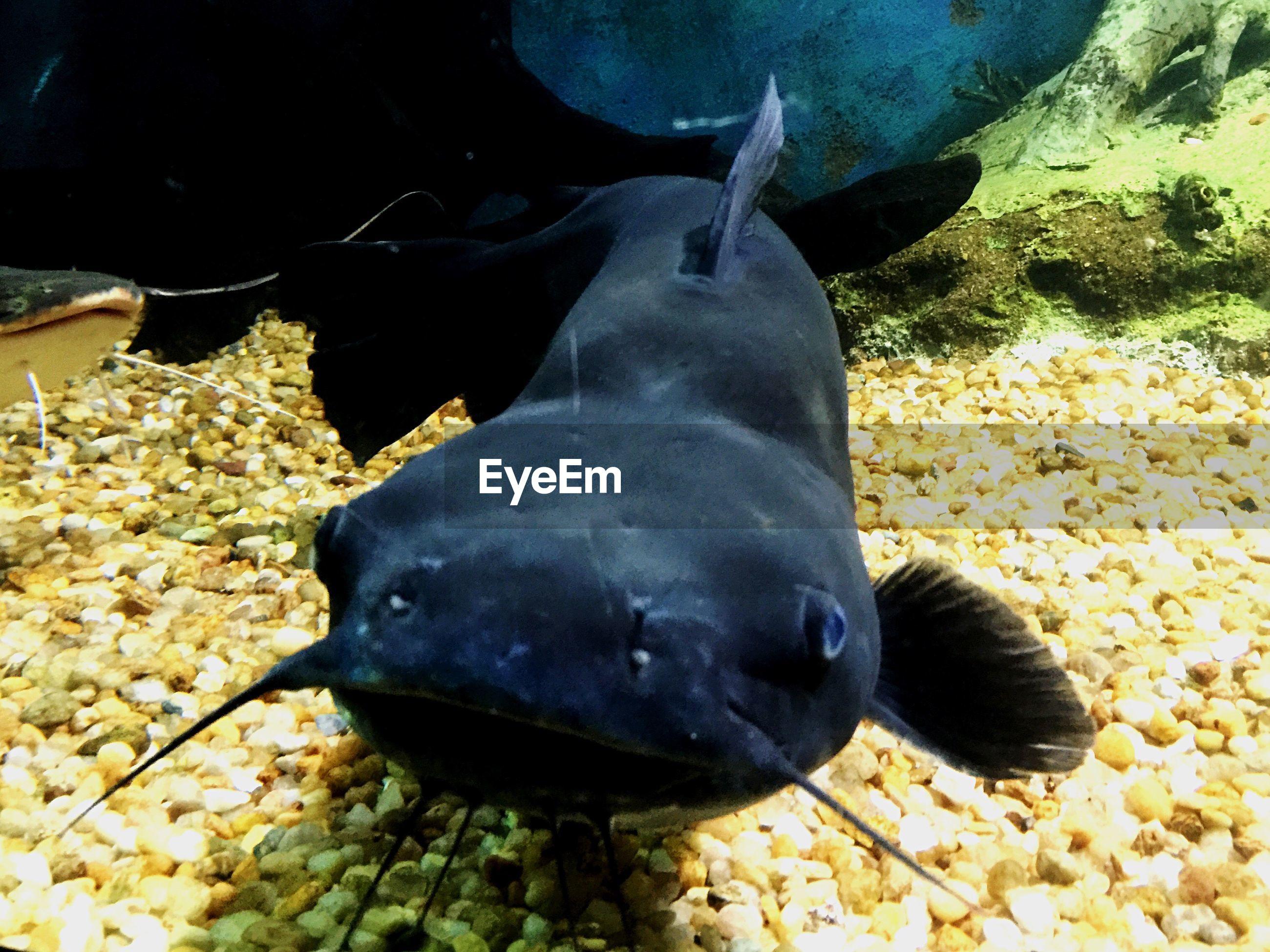 Close-up of catfish swimming in aquarium