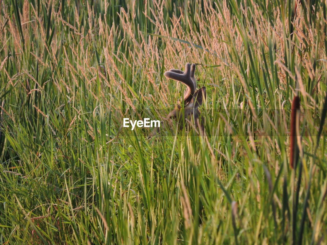 Deer Amidst Plants On Field