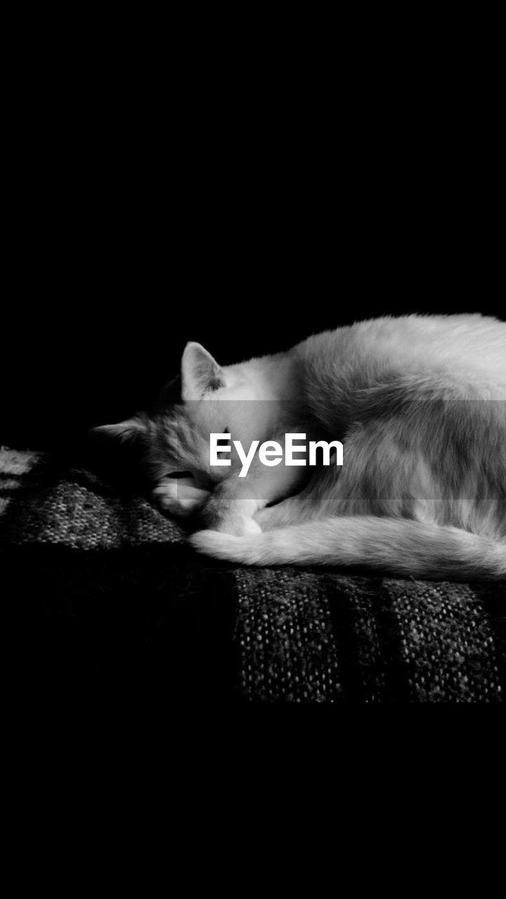 CLOSE-UP OF CAT SLEEPING ON BLACK