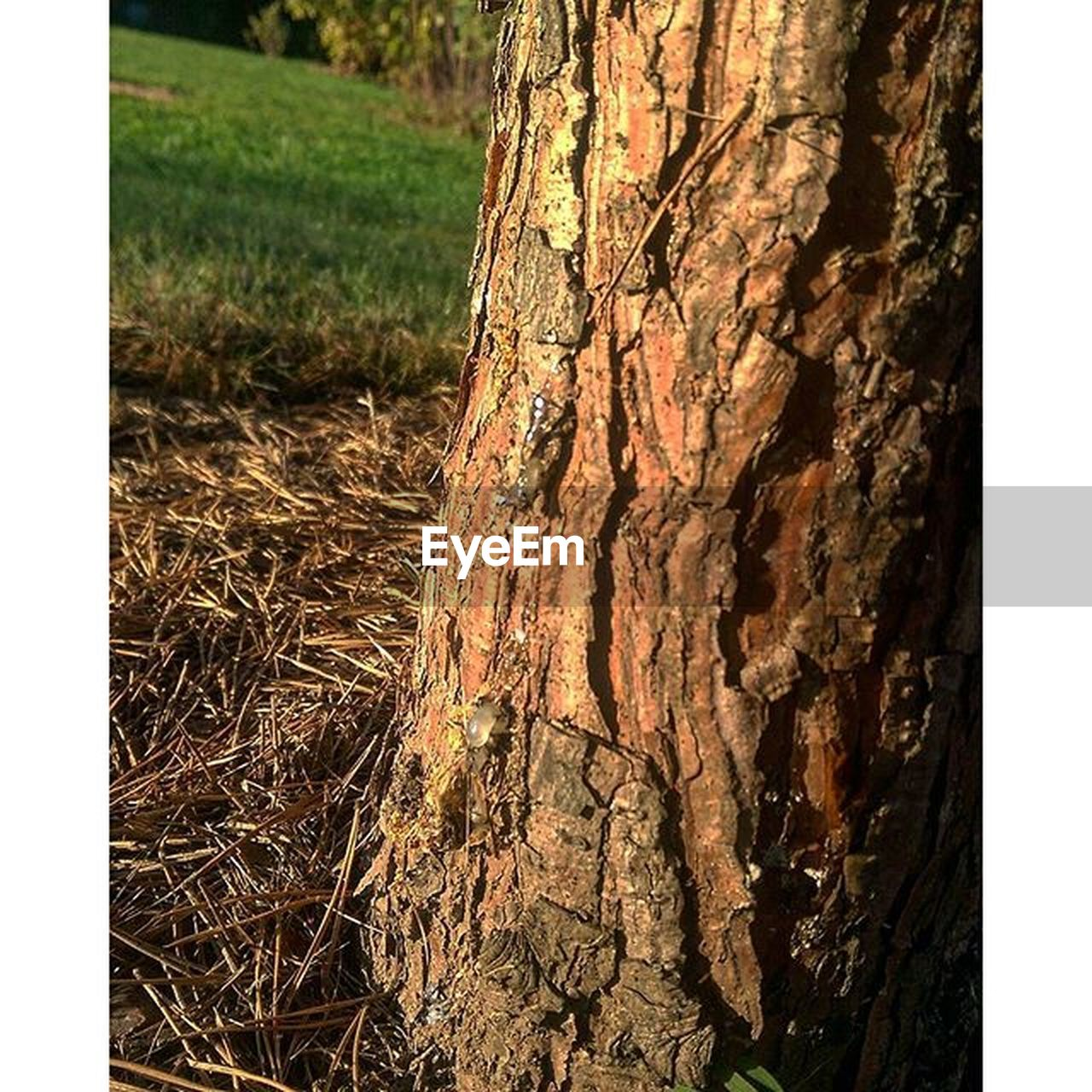 tree trunk, nature, day, tree, textured, no people, close-up, outdoors, grass