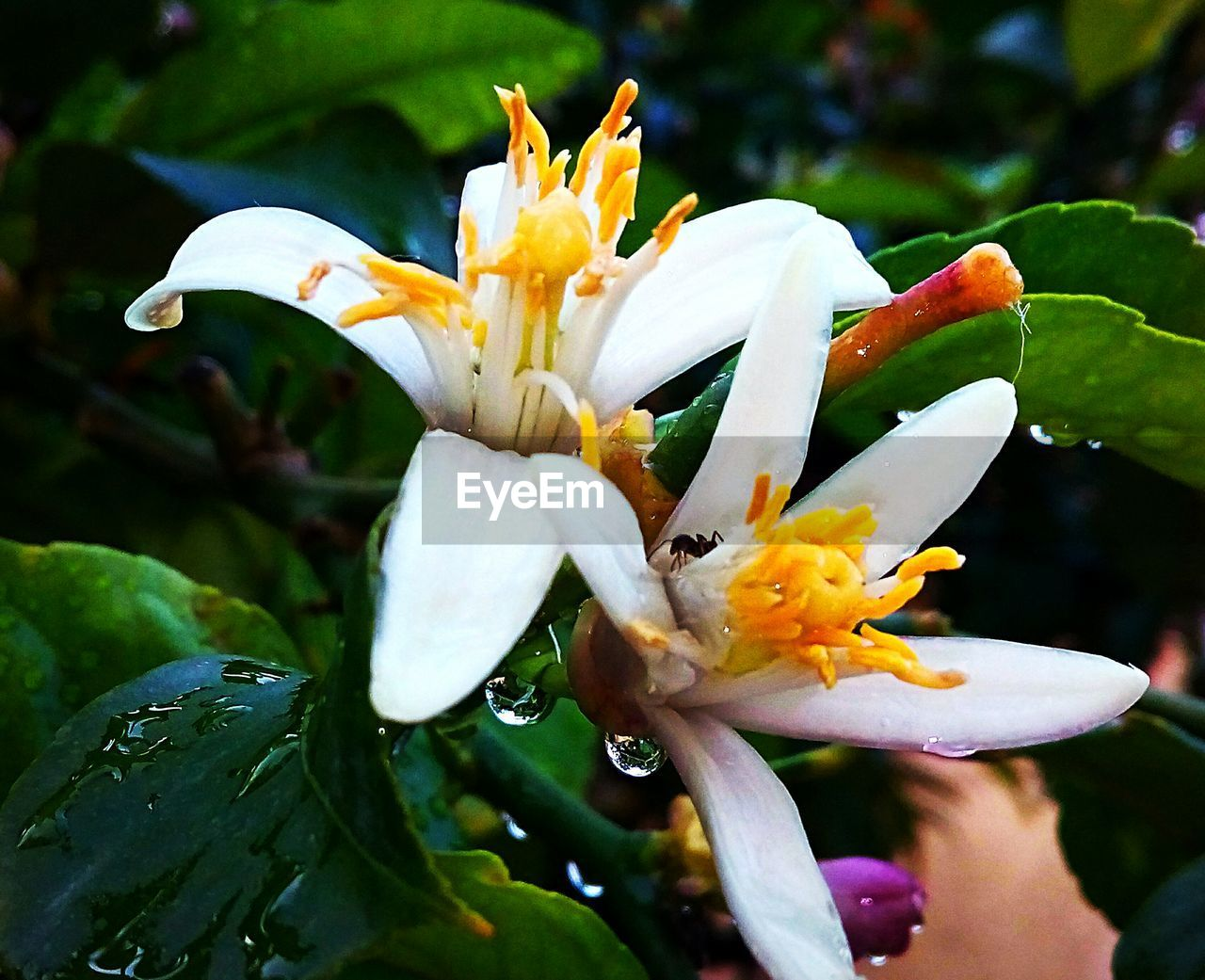 flowering plant, flower, vulnerability, fragility, plant, petal, growth, beauty in nature, freshness, inflorescence, close-up, flower head, focus on foreground, pollen, nature, day, water, no people, wet, outdoors, raindrop