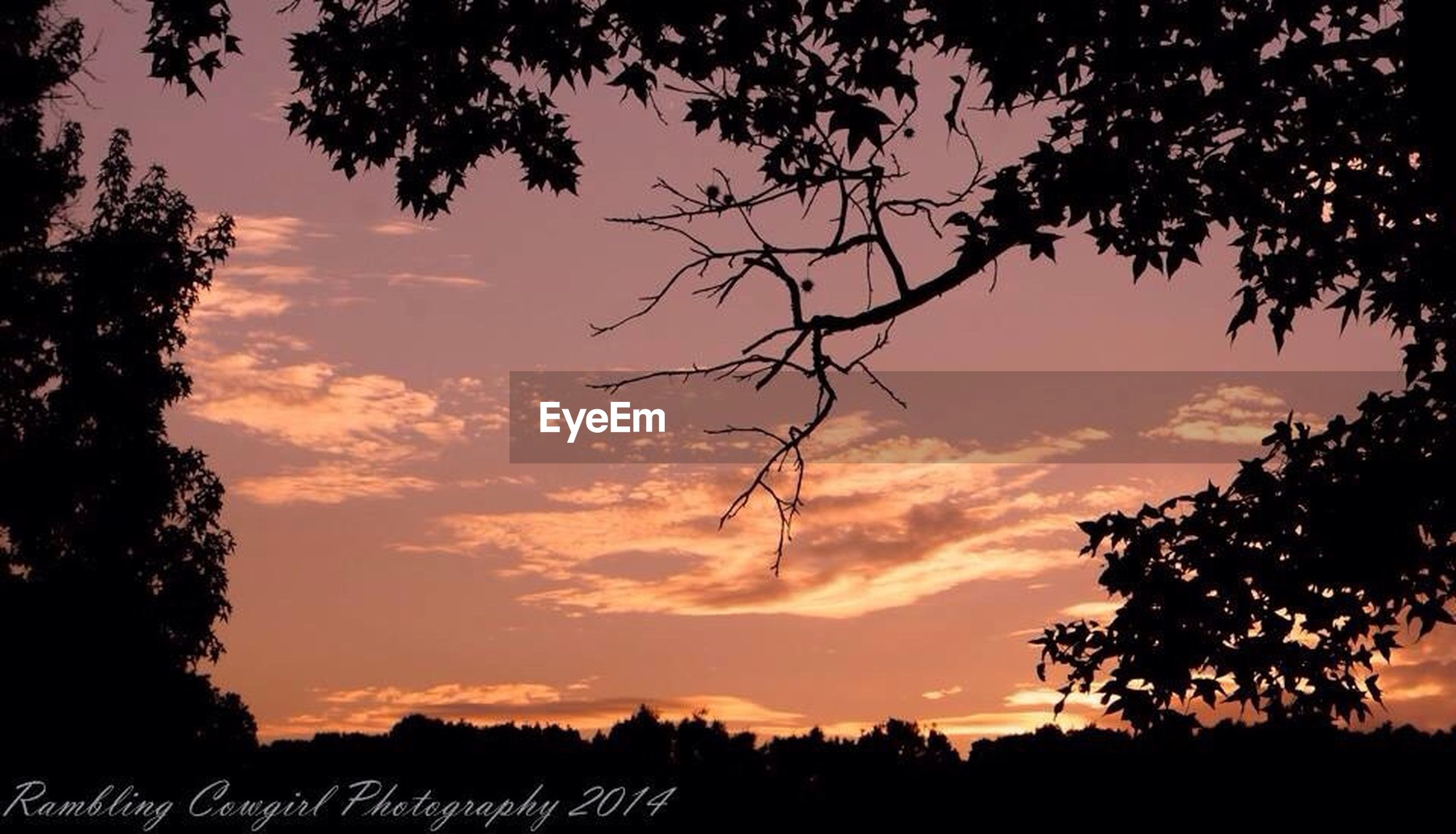 silhouette, sunset, tree, tranquility, tranquil scene, sky, scenics, beauty in nature, nature, cloud - sky, orange color, idyllic, branch, landscape, low angle view, dramatic sky, dusk, bare tree, growth, cloud