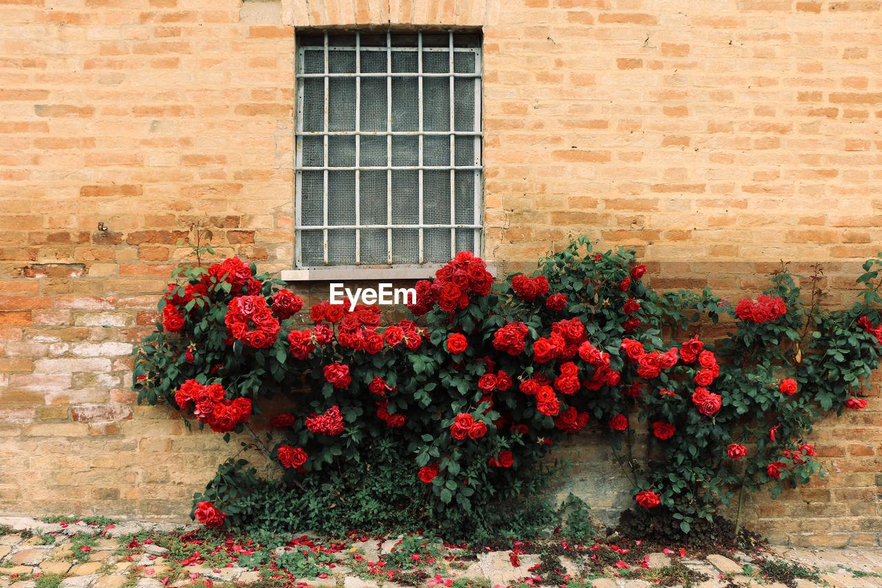 Flowers blooming against brick wall