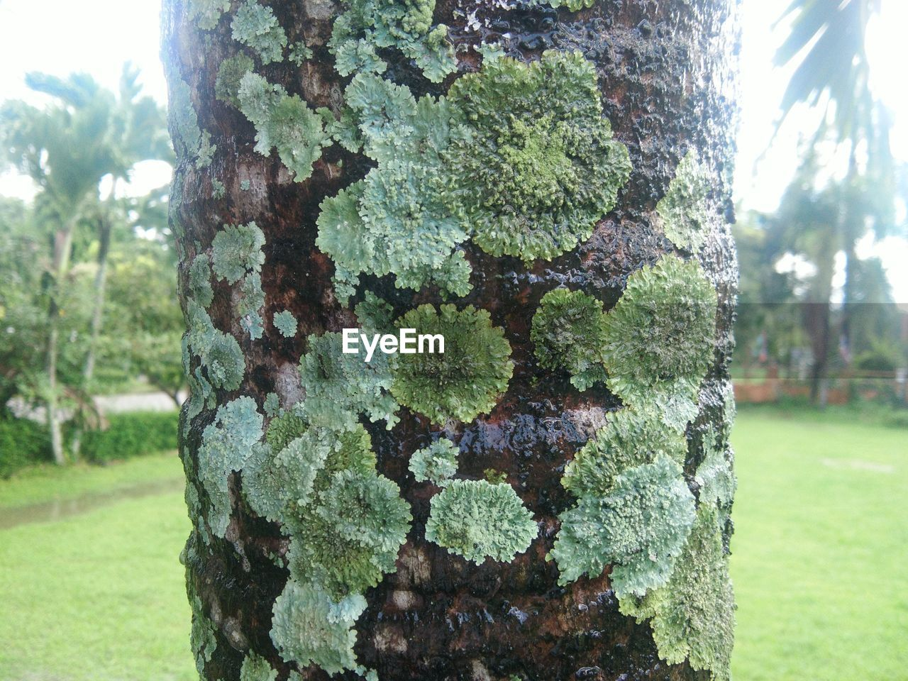 tree, tree trunk, trunk, plant, focus on foreground, growth, nature, day, close-up, green color, outdoors, no people, park, land, textured, moss, grass, field, rough, plant bark, bark, lichen