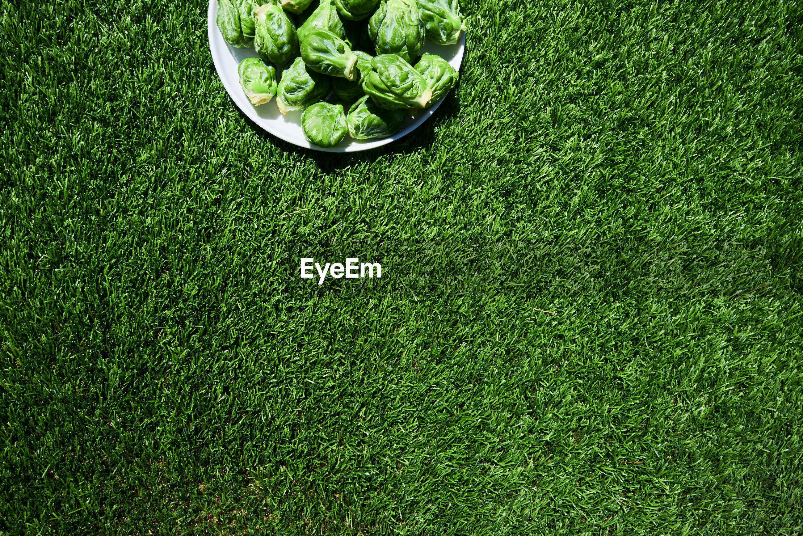 Directly above shot of brussels sprouts on grassy field