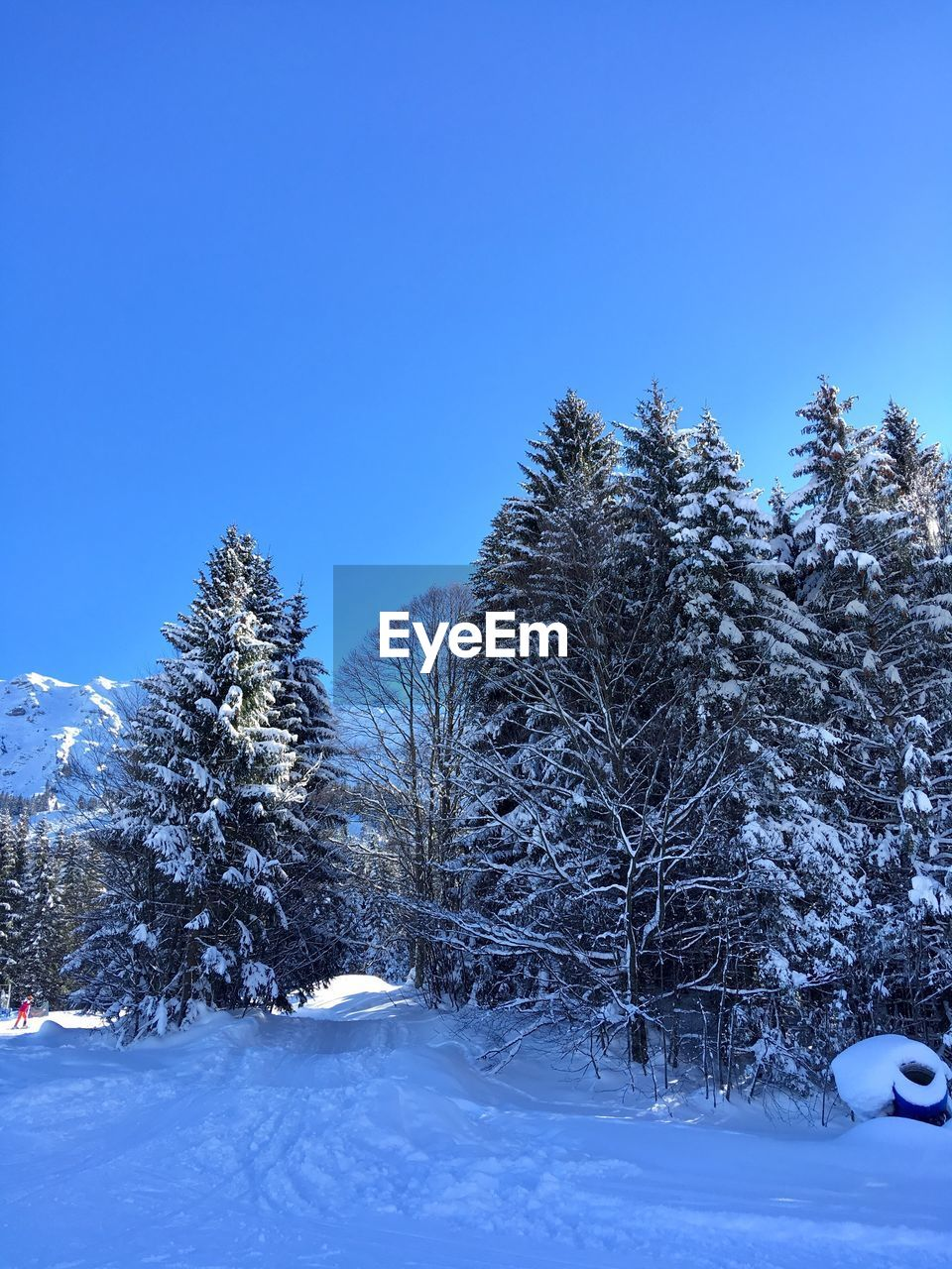 snow, cold temperature, winter, tree, plant, sky, beauty in nature, clear sky, blue, nature, tranquility, scenics - nature, covering, tranquil scene, white color, day, land, field, non-urban scene, no people, snowcapped mountain