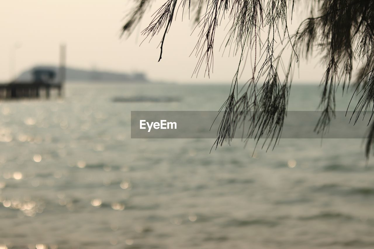 water, sky, sea, focus on foreground, beauty in nature, nature, tranquility, no people, tranquil scene, scenics - nature, outdoors, day, waterfront, sunset, beach, land, horizon, close-up, selective focus