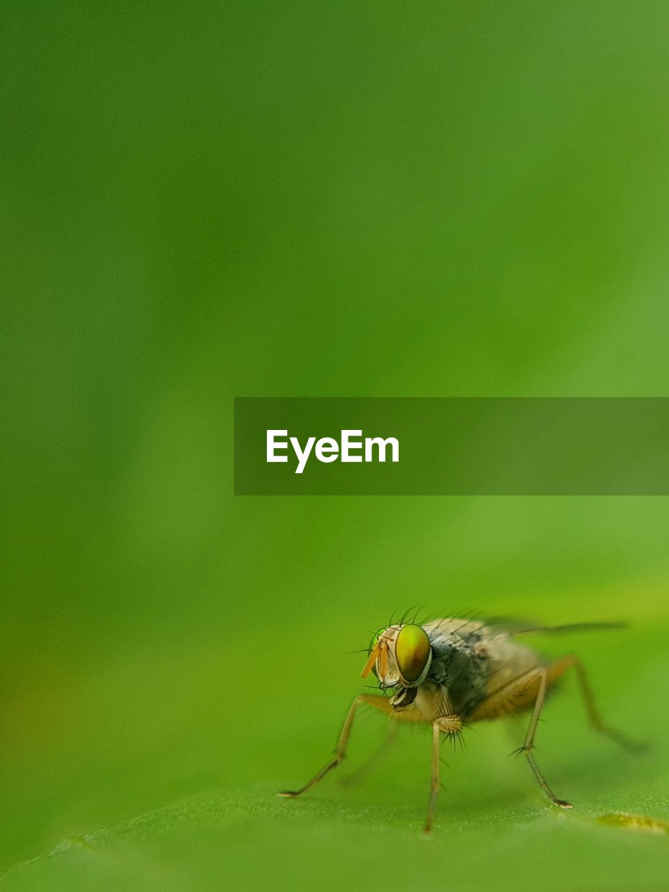 invertebrate, insect, animal themes, one animal, animal, animal wildlife, animals in the wild, close-up, no people, copy space, green color, day, arthropod, nature, zoology, outdoors, fly, leaf, plant part, focus on foreground, animal eye