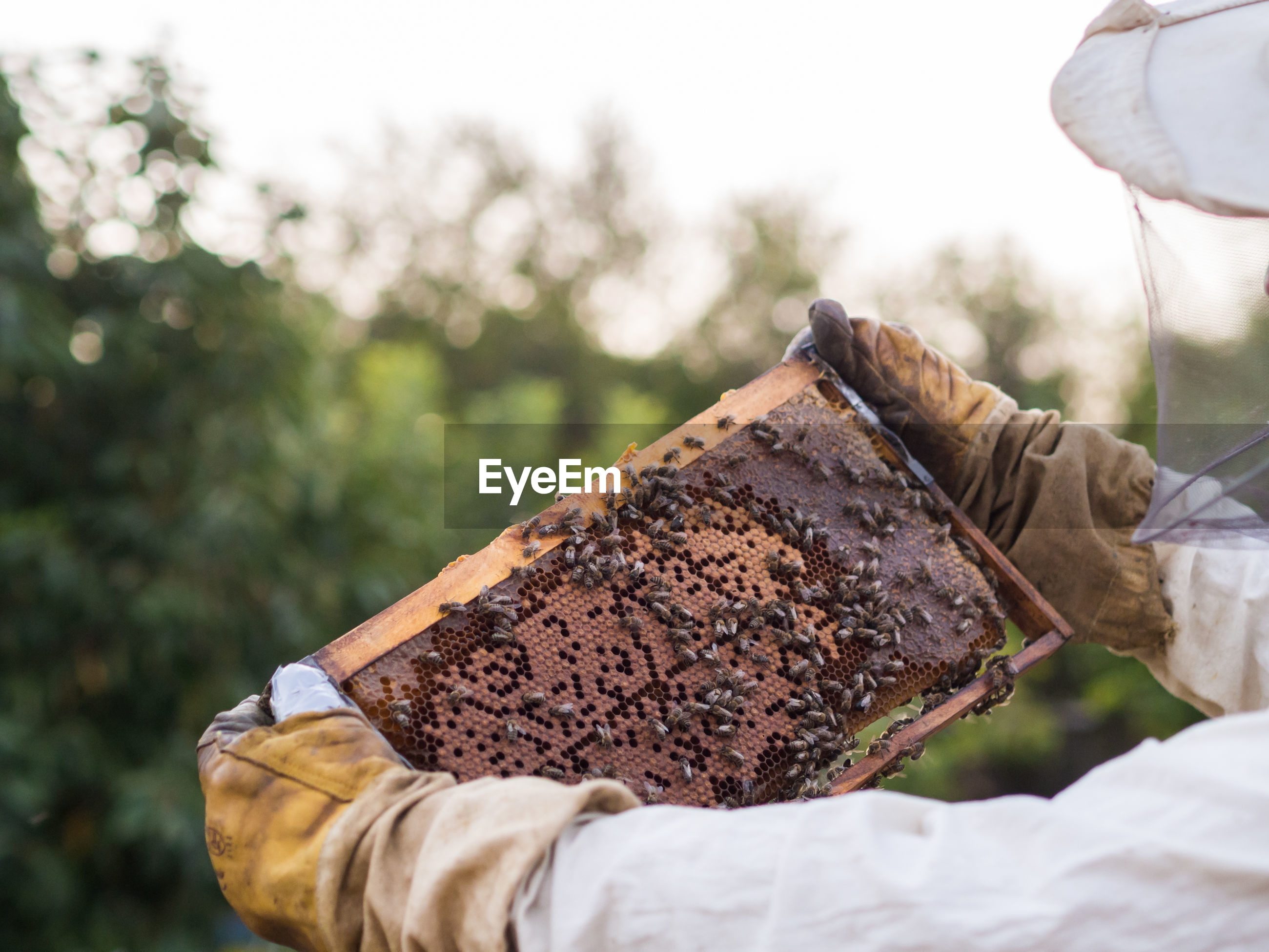 Cropped hands of beekeeper holding beehive
