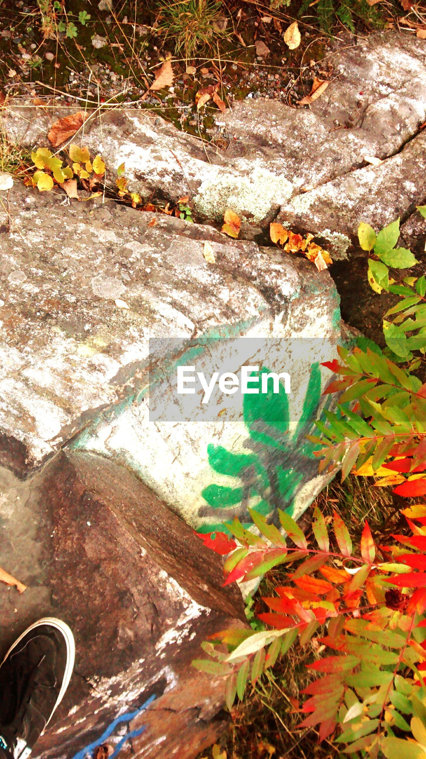 high angle view, leaf, plant, growth, day, outdoors, nature, no people, bicycle, sunlight, fallen, wall - building feature, messy, street, abandoned, flower, ground, footpath, green color, autumn