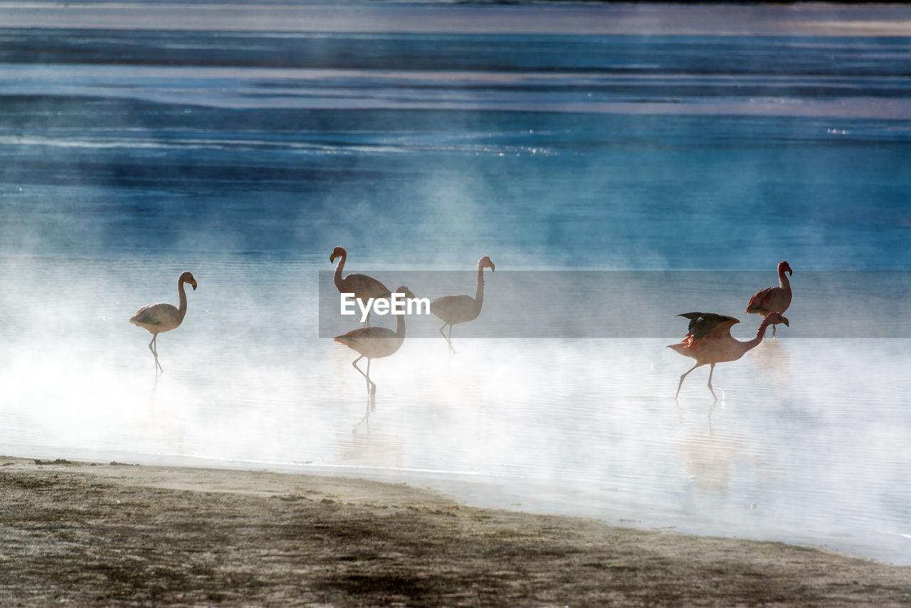 Flamingoes In Laguna Colorada