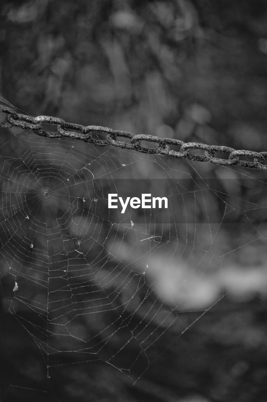 Close-up of spiders on web
