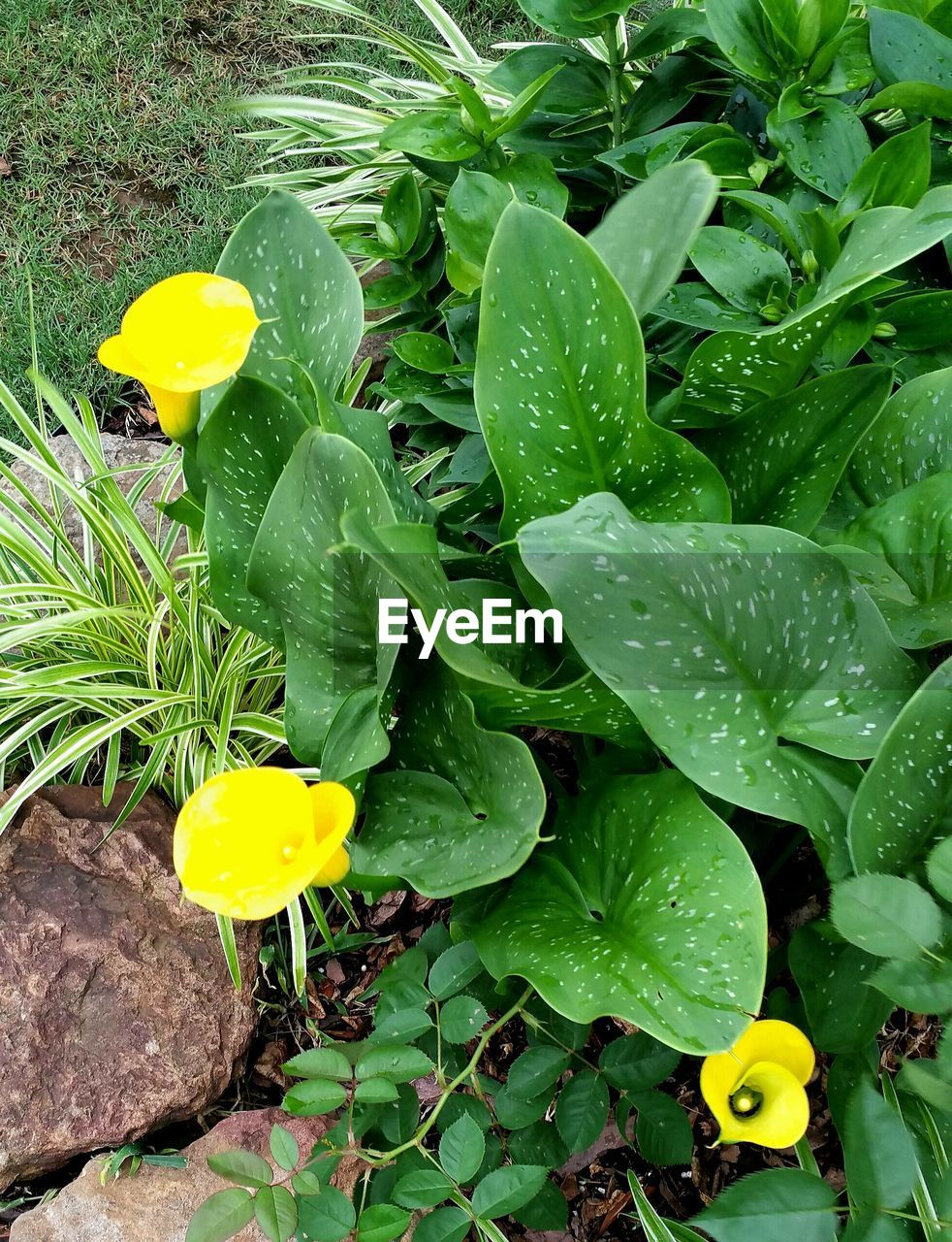 leaf, growth, yellow, plant, green color, flower, nature, beauty in nature, freshness, outdoors, fragility, no people, drop, petal, close-up, blooming, day, flower head
