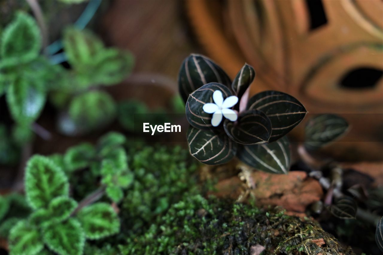 plant, close-up, no people, nature, plant part, selective focus, leaf, green color, day, growth, art and craft, beauty in nature, creativity, freshness, flower, flowering plant, outdoors, high angle view, still life, potted plant, butterfly - insect
