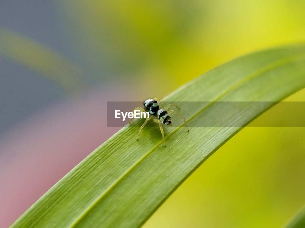invertebrate, insect, close-up, animal themes, animals in the wild, animal wildlife, animal, one animal, plant part, green color, leaf, no people, nature, plant, day, focus on foreground, outdoors, selective focus, beauty in nature, growth, blade of grass
