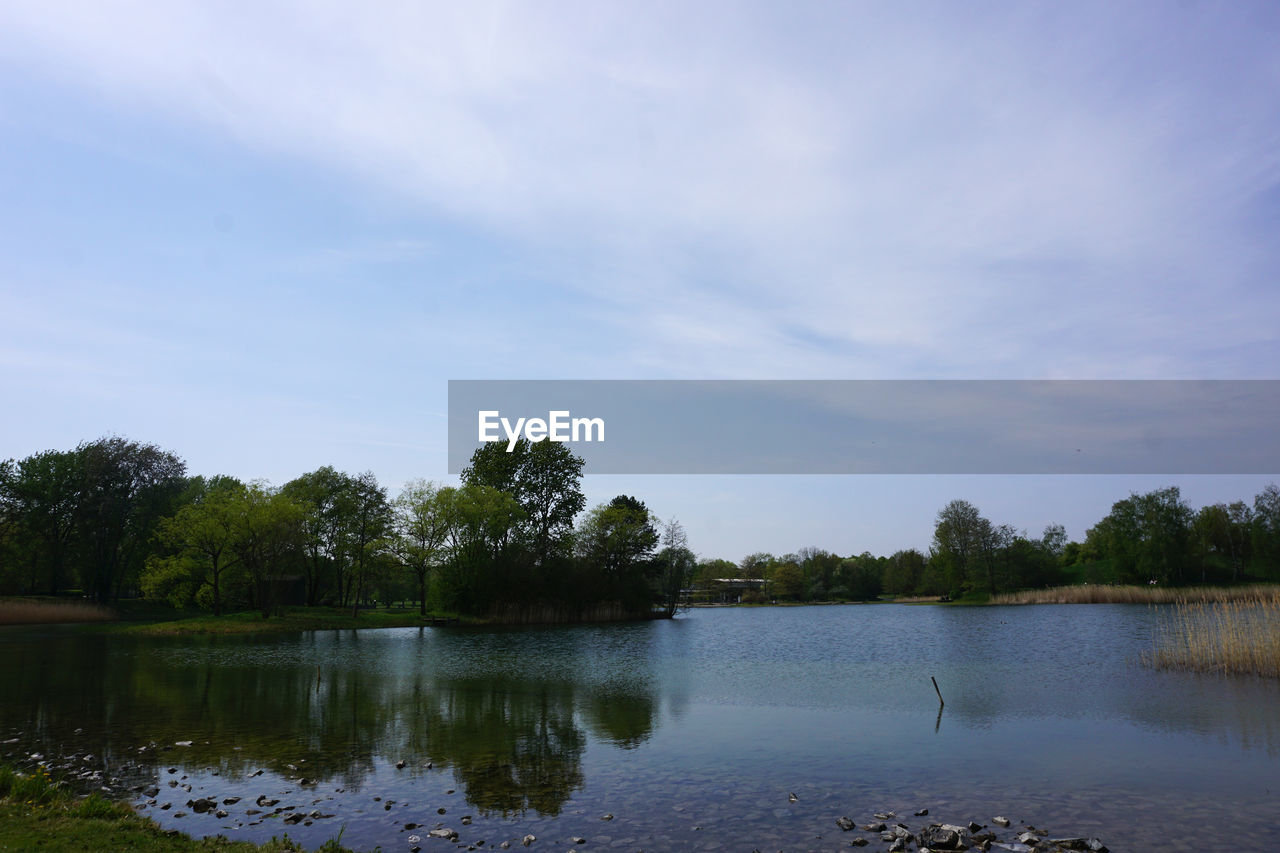 water, tree, plant, sky, lake, tranquility, nature, tranquil scene, beauty in nature, no people, scenics - nature, animal, cloud - sky, bird, day, animal themes, animal wildlife, reflection, waterfront, outdoors