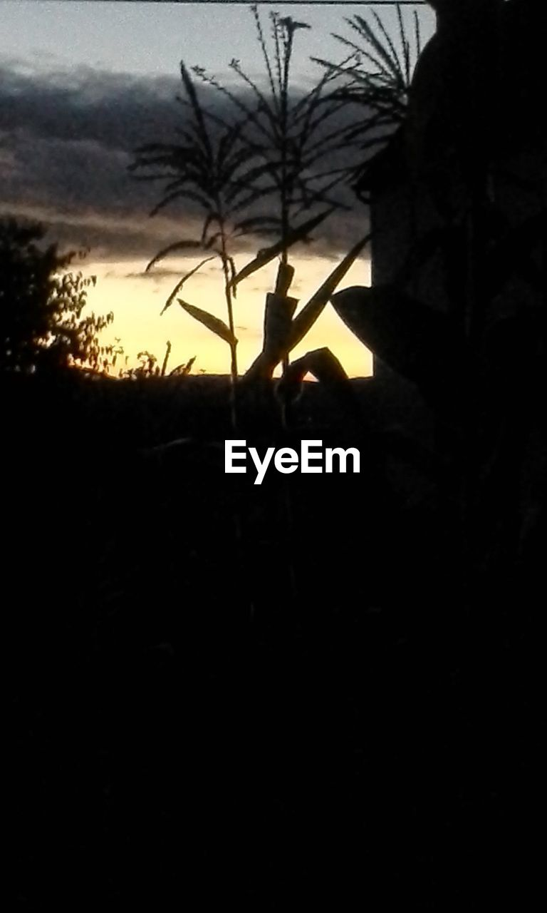 silhouette, sunset, real people, tree, outdoors, nature, sky, growth, men, day, one person, beauty in nature, people