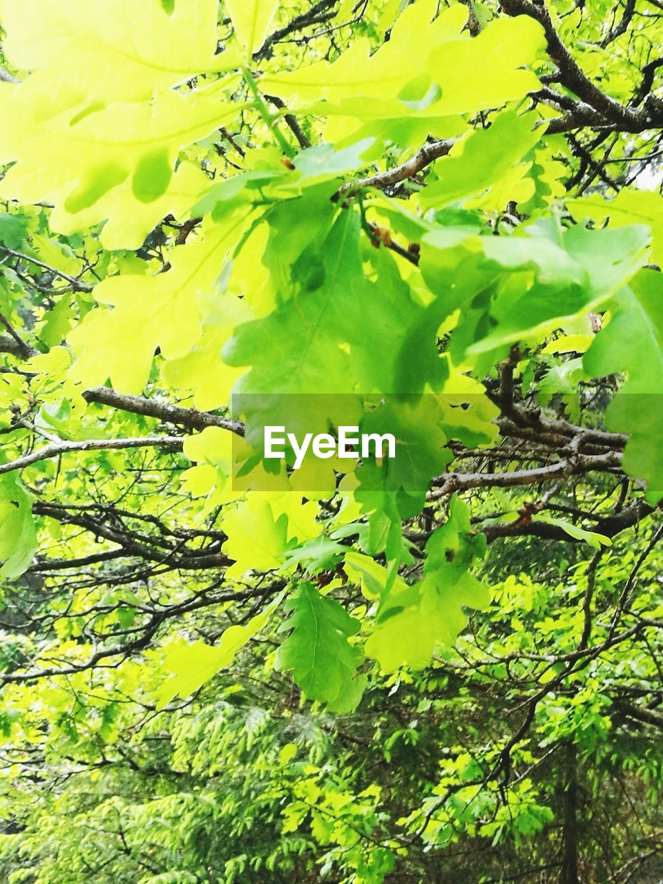 growth, green color, leaf, nature, plant, no people, outdoors, day, beauty in nature, close-up, branch, tree