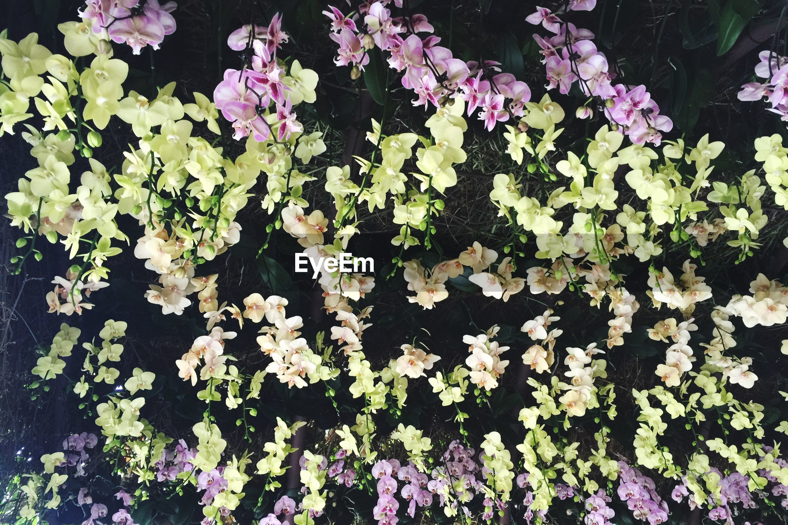 Upside down image of orchids blooming on field