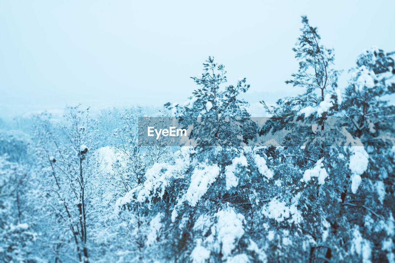 cold temperature, winter, snow, weather, nature, white color, beauty in nature, frozen, no people, tranquility, day, outdoors, clear sky, scenics, tree, close-up, snowflake, sky, freshness
