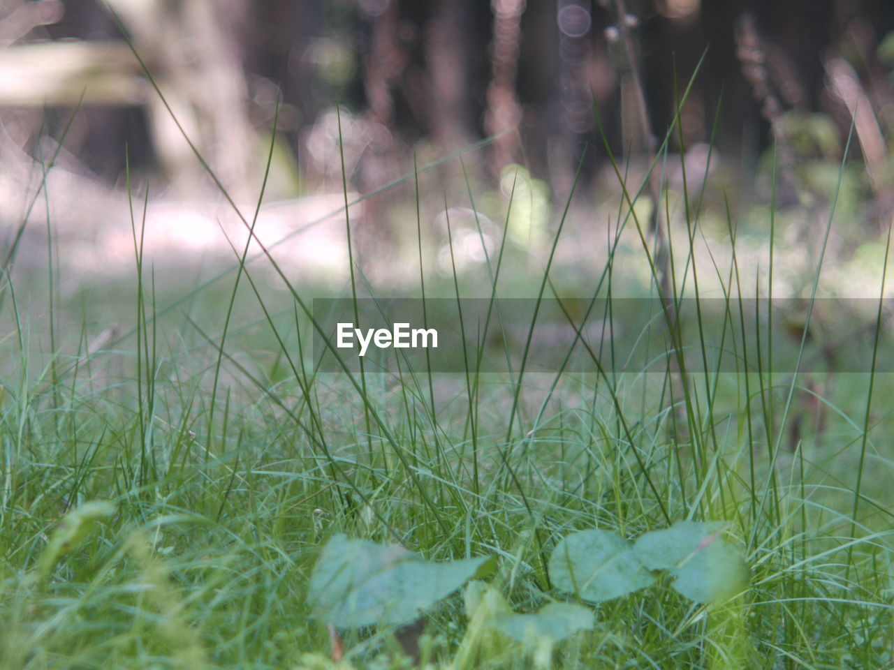 plant, growth, grass, green color, land, field, nature, selective focus, tranquility, day, no people, beauty in nature, close-up, freshness, outdoors, flower, flowering plant, focus on foreground, environment, tranquil scene, blade of grass