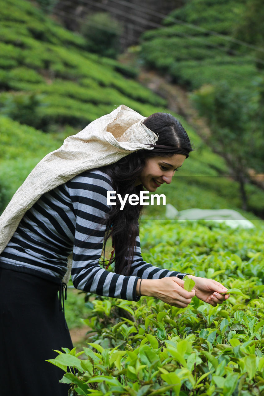 Side view of young woman collecting tea leaves at farm