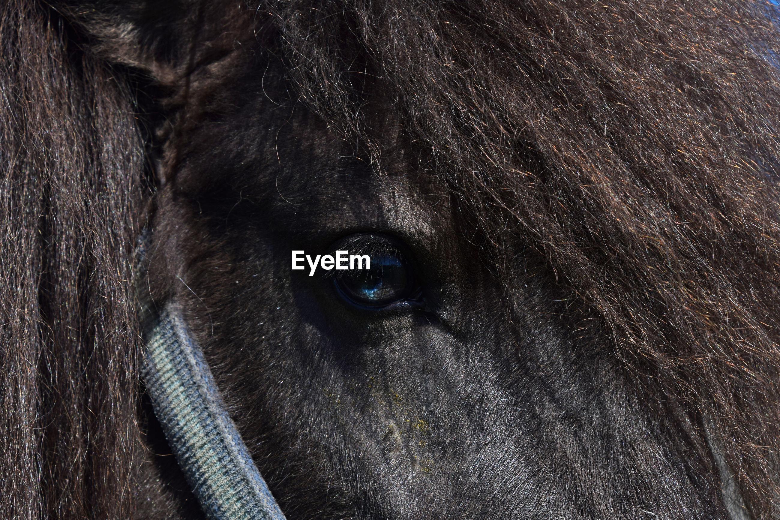 Extreme close up of horse eye