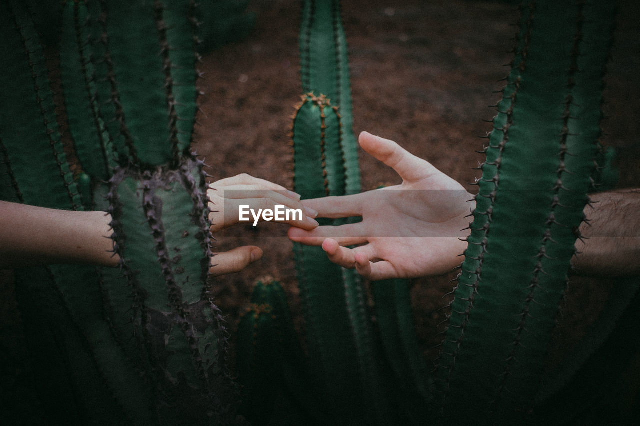 Cropped Couple Touching Hands Amidst Cactus