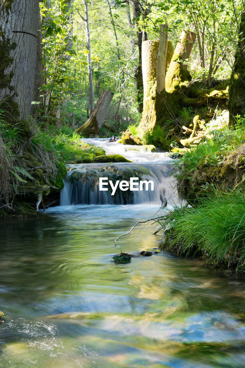 water, forest, plant, tree, beauty in nature, motion, nature, scenics - nature, flowing water, land, river, day, long exposure, tranquility, no people, blurred motion, non-urban scene, green color, tranquil scene, stream - flowing water, outdoors, flowing, woodland, rainforest, power in nature