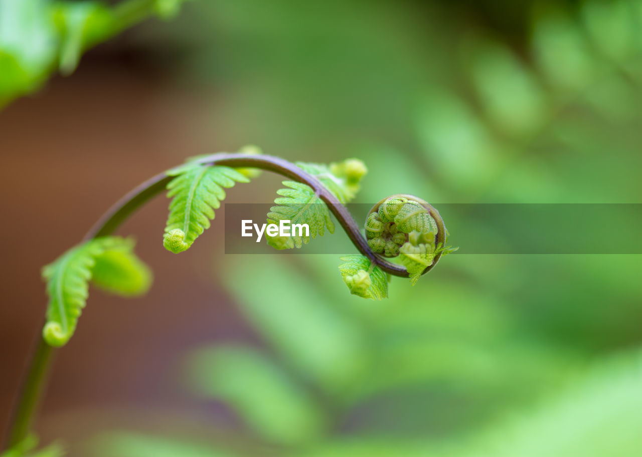 green color, plant, growth, close-up, leaf, beauty in nature, plant part, focus on foreground, nature, no people, selective focus, day, vulnerability, fragility, freshness, outdoors, tranquility, plant stem, tendril, beginnings