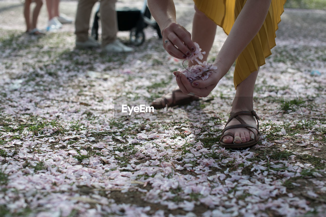 Low Section Of Woman Picking Up Flowers On Field
