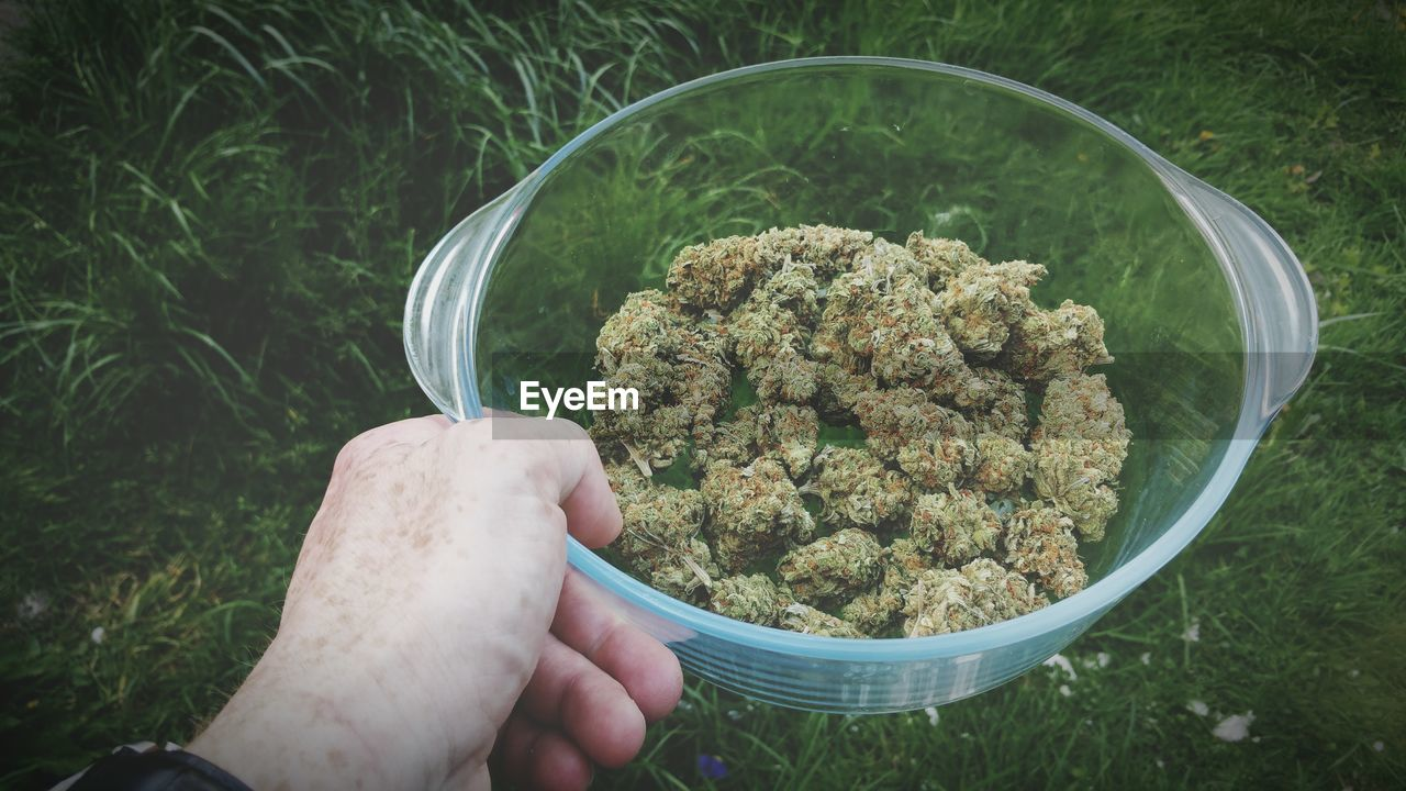 Cropped Image Of Hand Holding Cannabis In Bowl